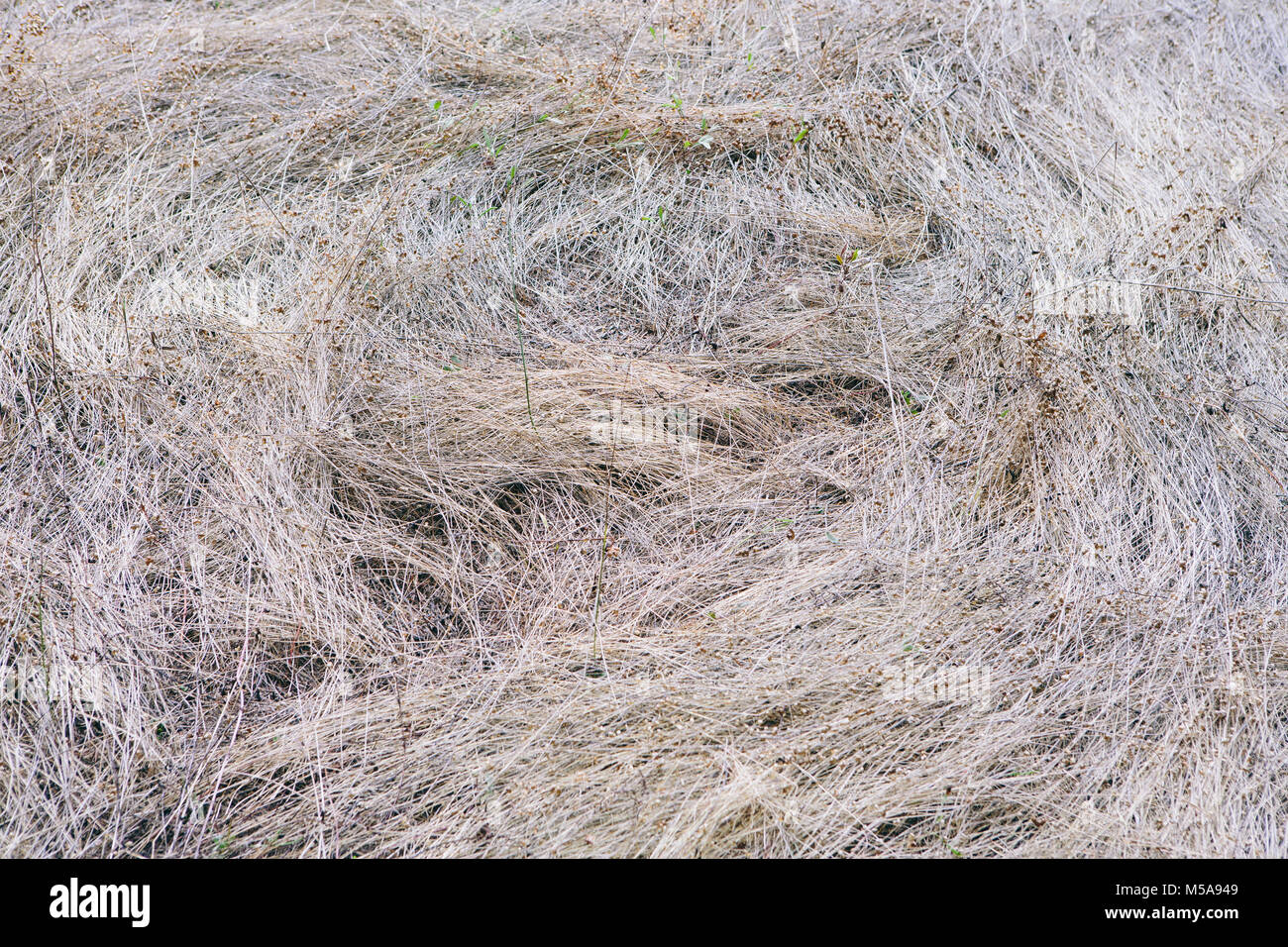 High angle view of swirls of dry grass. - Stock Image