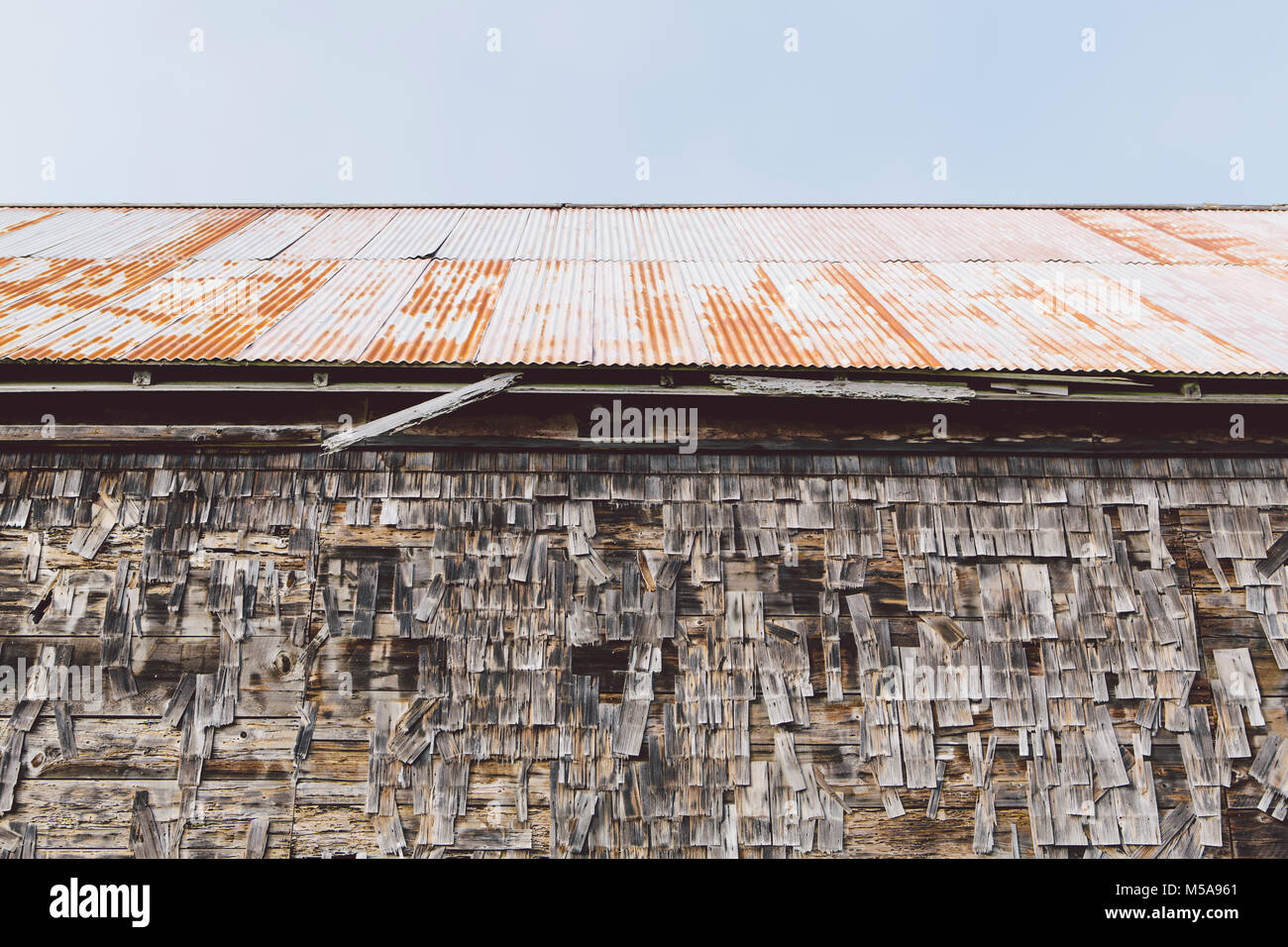 An old farmhouse with wooden shingle tiles on the walls and corrugated iron roof. Silvery grey colours. - Stock Image