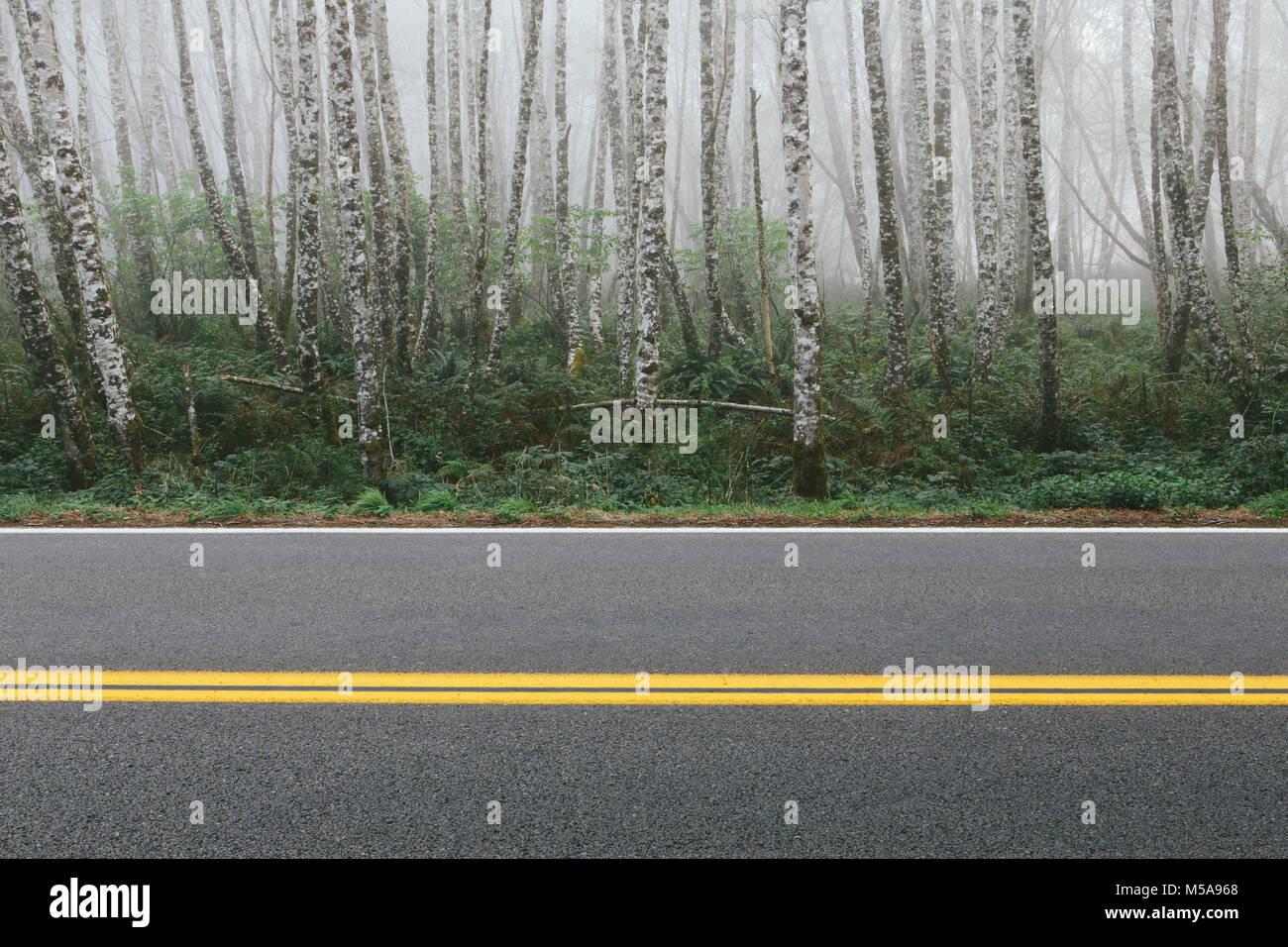 Rural highway through dense woodland, alder trees with slim straight tree trunks. - Stock Image
