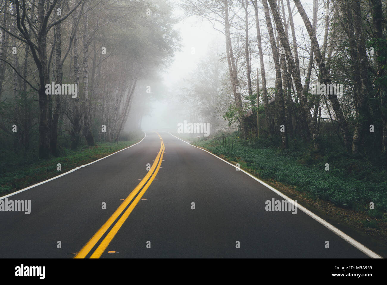 Rural highway through a forest of alder trees into the distance, mist hanging in the trees. - Stock Image