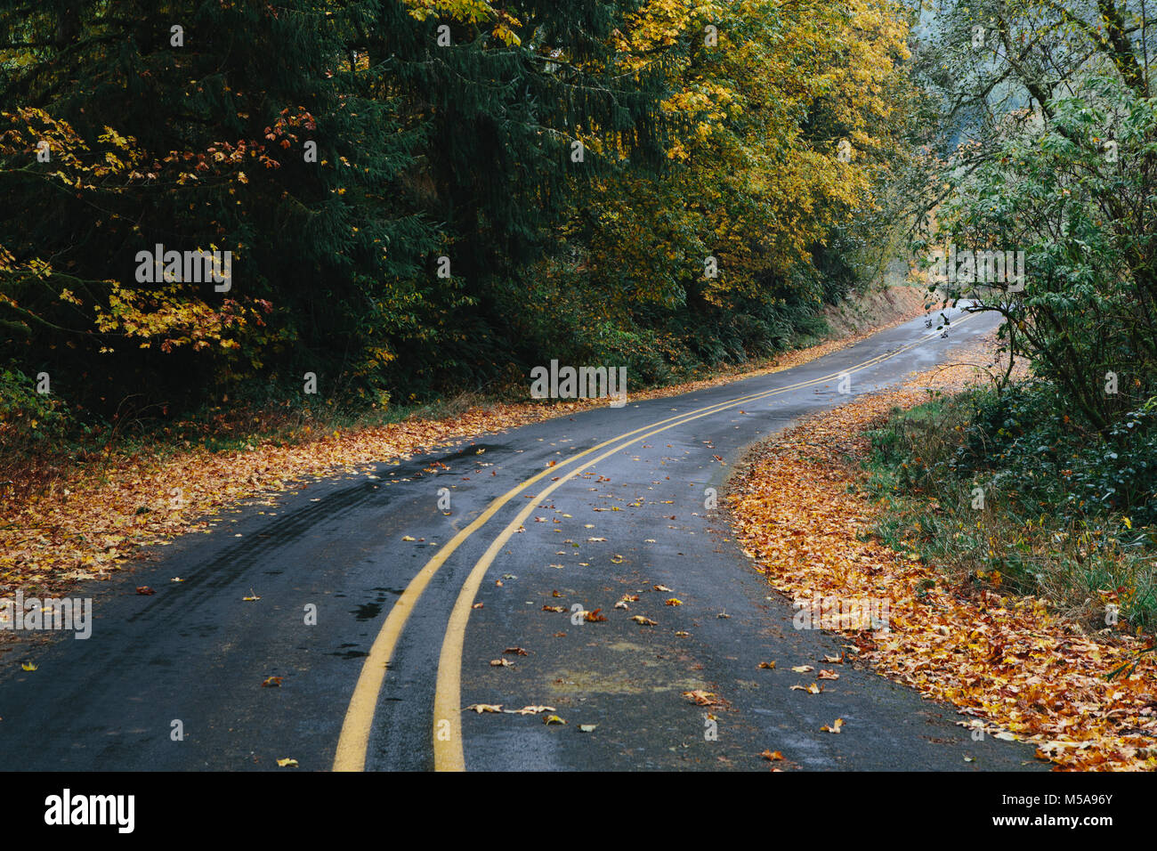 Curving road through a forest in autumn, fallen leaves lining the edges of the road. - Stock Image