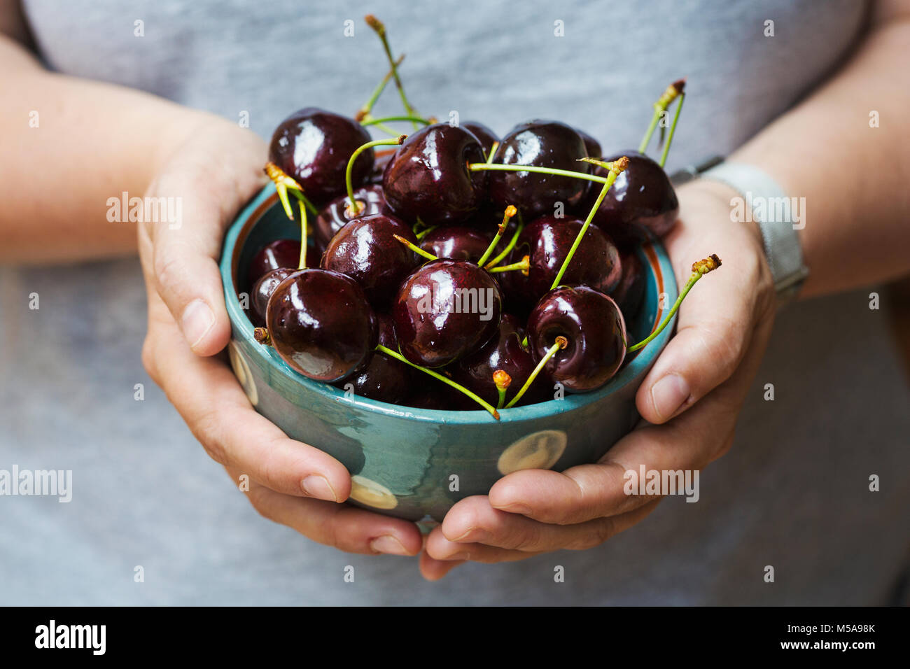 A woman's hands holding a bowl of ripe dark red cherries. - Stock Image