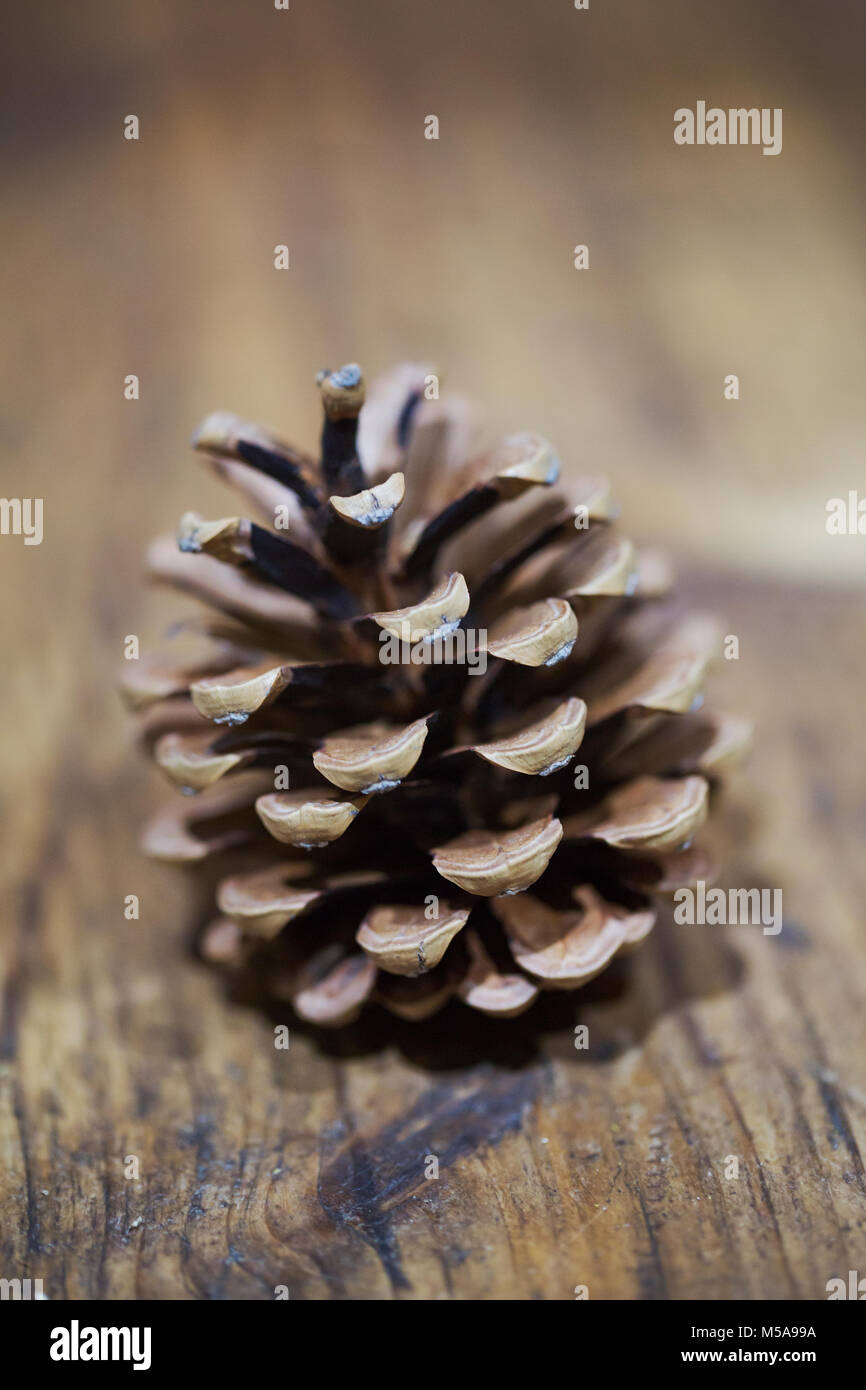 A brown dried pine cone on a wooden table. - Stock Image