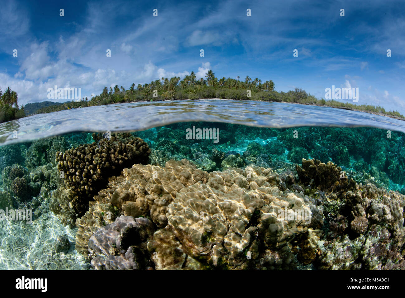 Over/under of the seabed between two small islands near Taha'a,  in French Polynesia. Fast flowing water nourishes - Stock Image