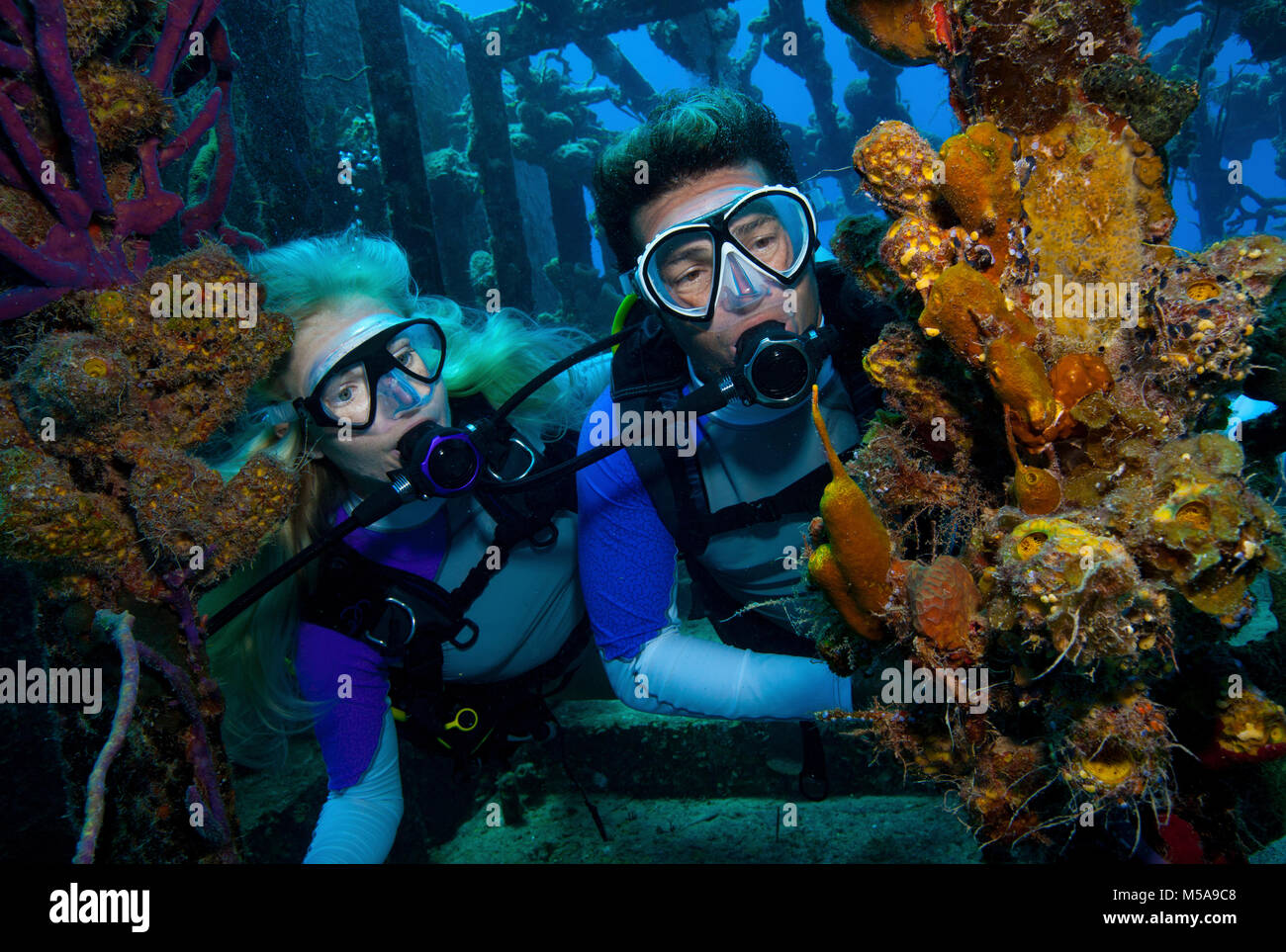 Divers observe marine life attached to the remnants of the hull of a shipwreck dive site. - Stock Image