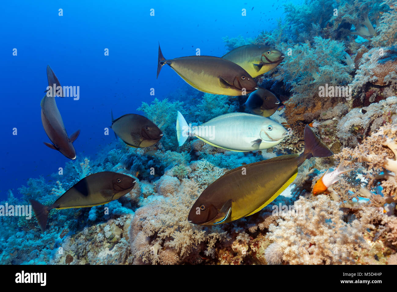 Fish swarm stock photos fish swarm stock images alamy for Fish cleaning station near me