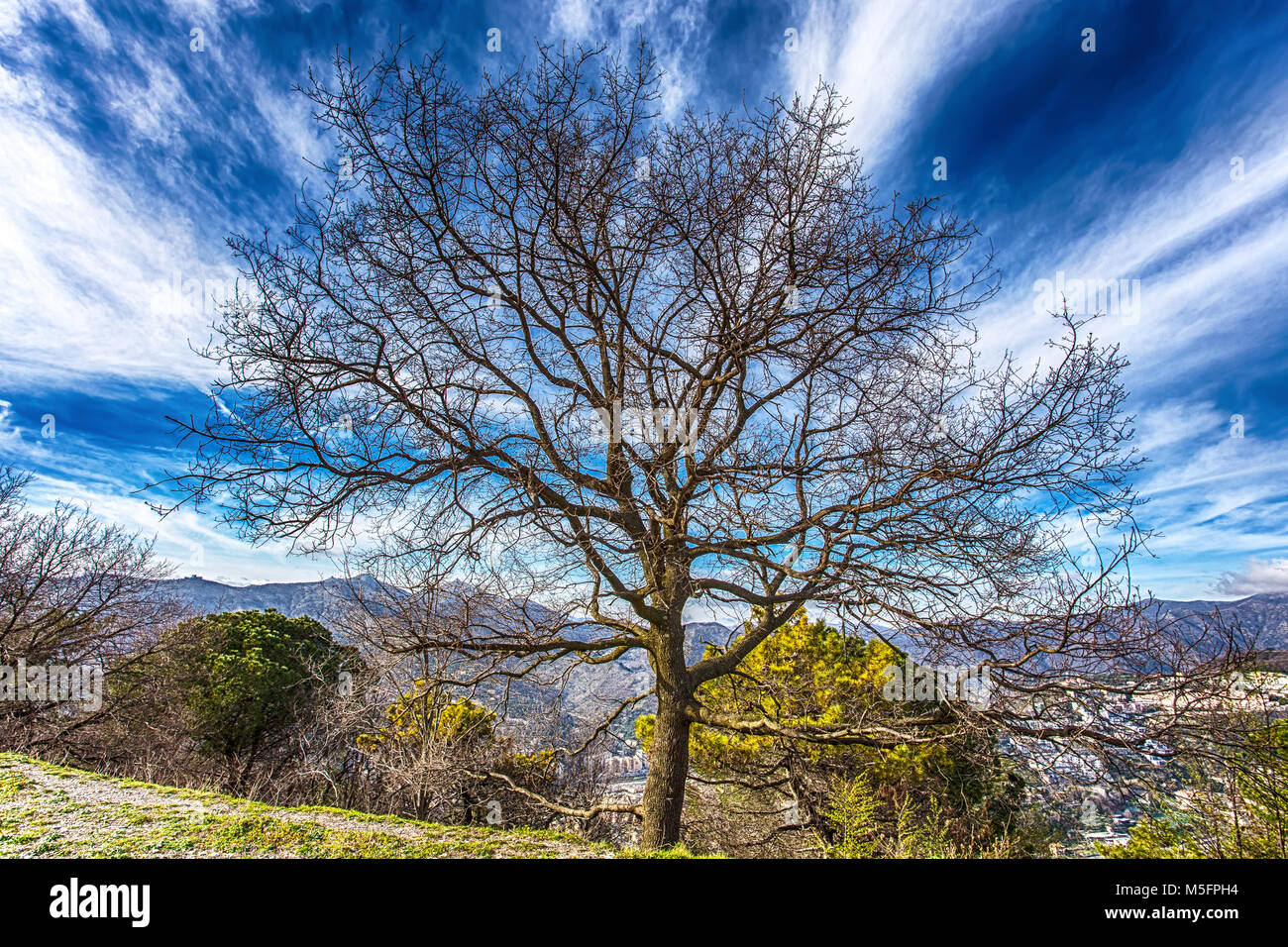 Deciduous Trees Great Smoky Mountains Stock Photos