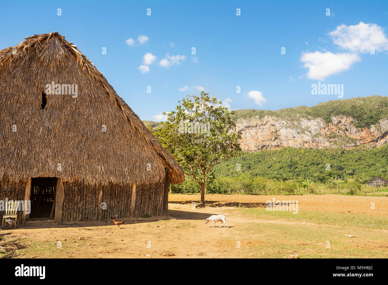 Dryer for tobacco in the valley of Vinales (Cuba) - Stock Image