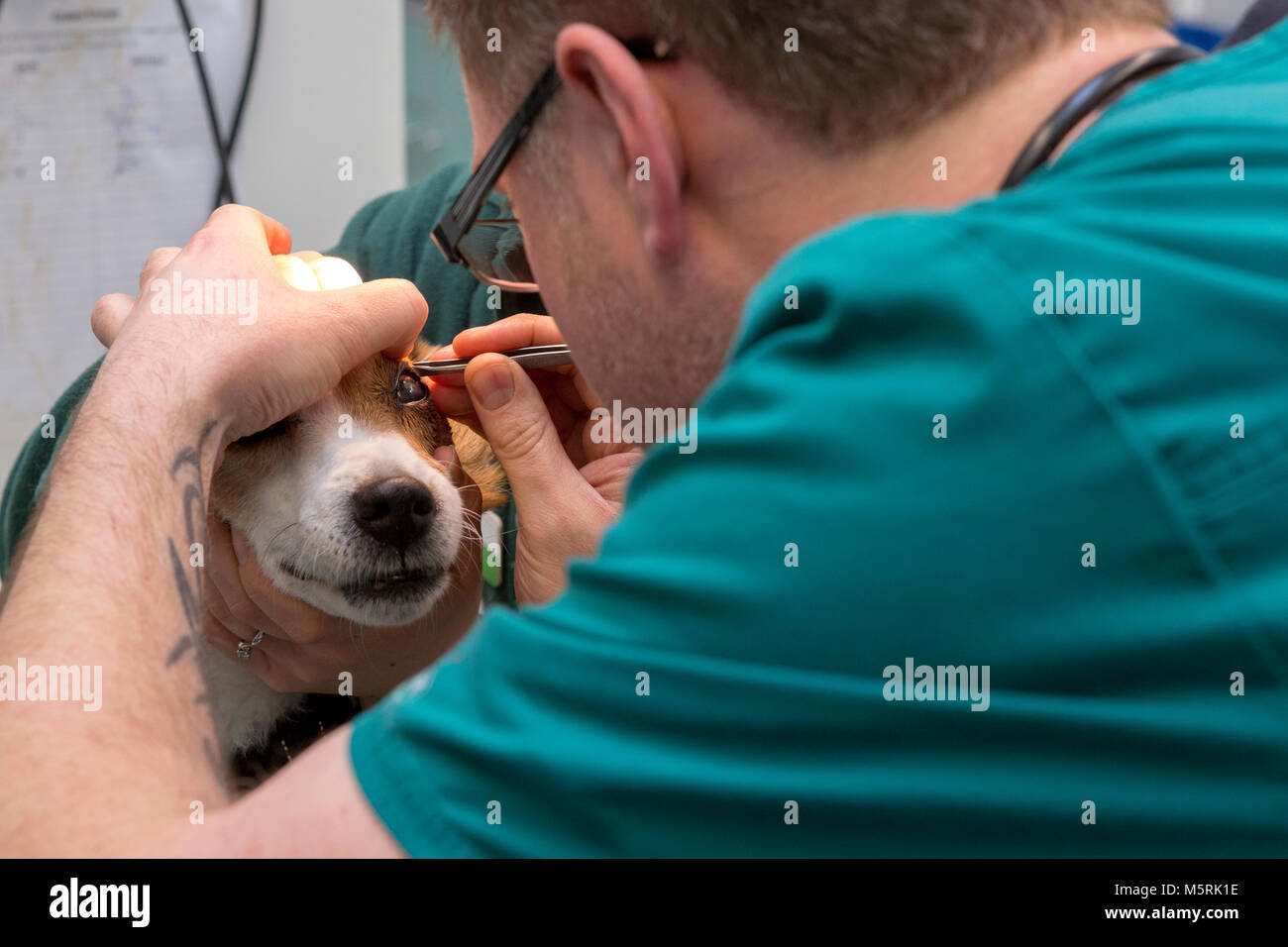 how to train to be a veterinary nurse