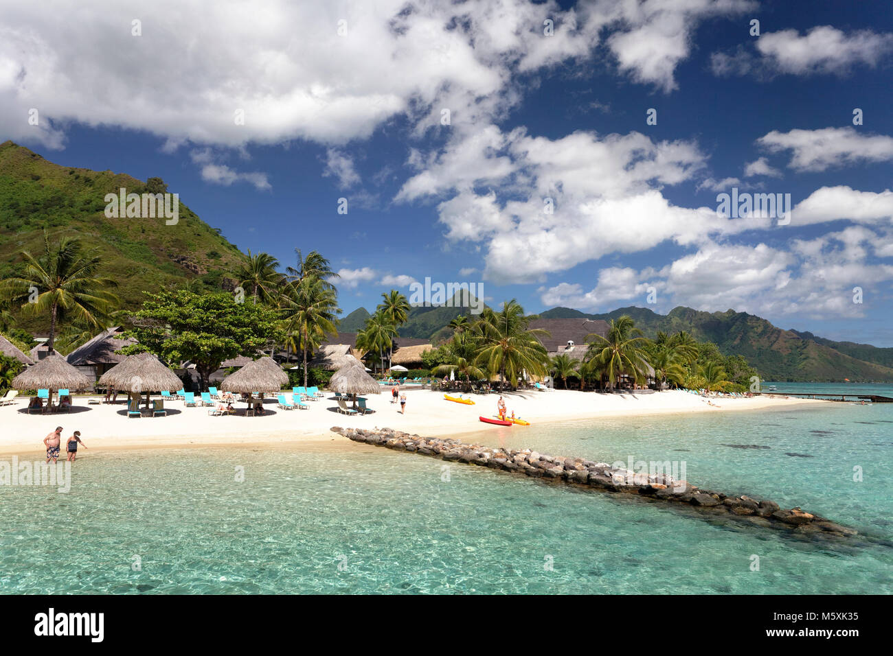 Beach with umbrellas and palm trees, Hilton Hotel, Moorea, Pacific Ocean, Society Islands, French Polynesia - Stock Image