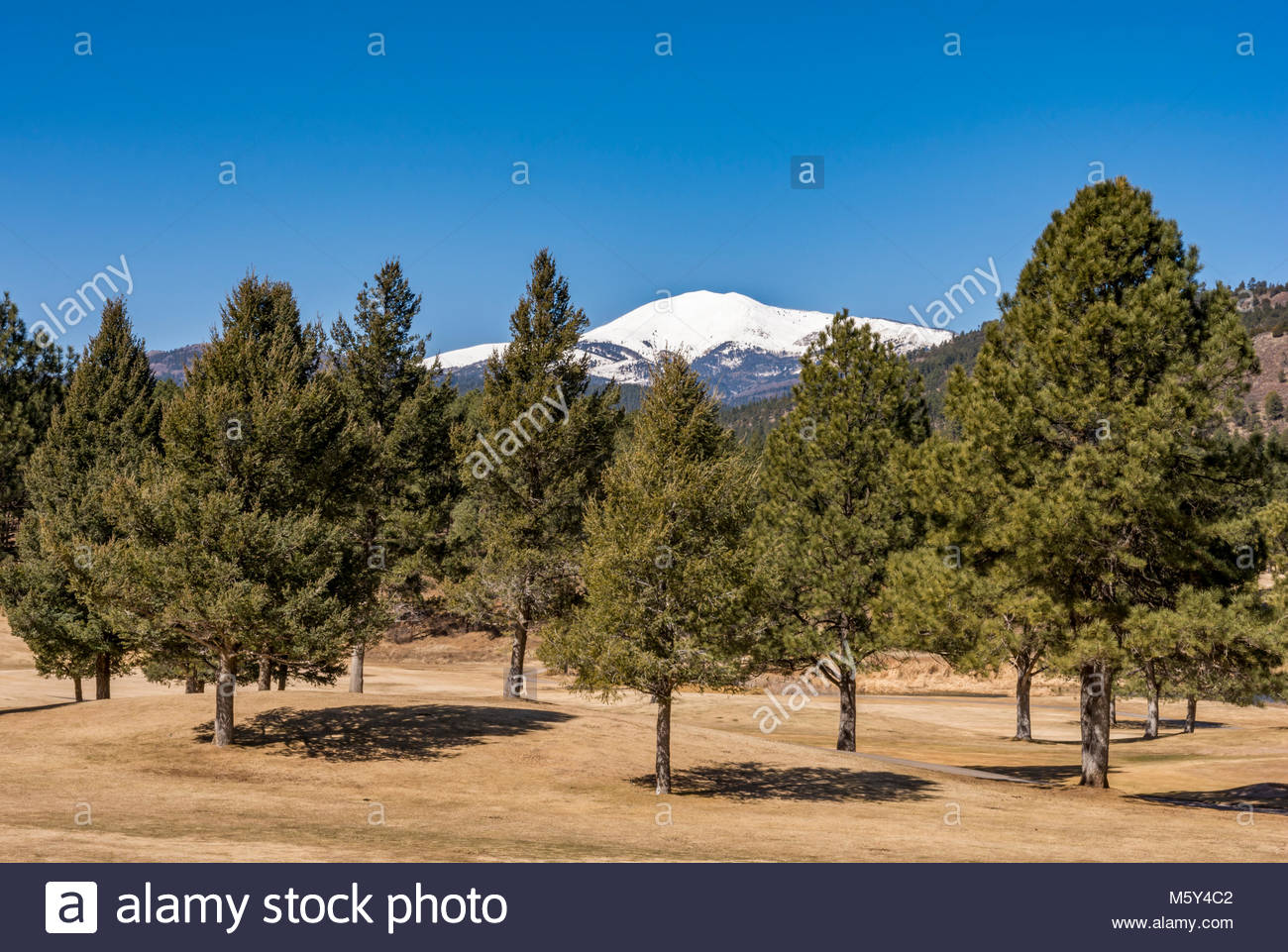 sierra blanca hindu singles The sierra blanca (spanish: white mountains) is a range of volcanic mountains  in lincoln and  much of the southern half of the range, including the summit of  sierra blanca peak, is within the mescalero apache indian reservation the  peak.