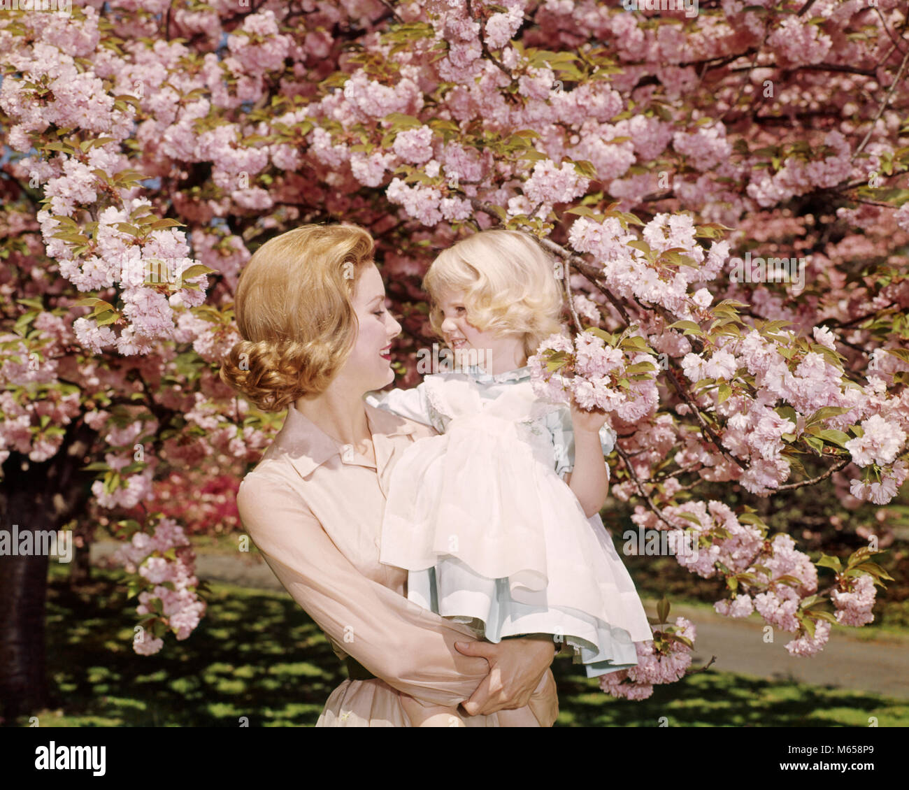 1950s 1960s REDHEAD MOTHER HOLDING BLONDE GIRL DAUGHTER AMONG CHERRY TREE BLOSSOMS - kb3112 HAR001 HARS NOSTALGIC - Stock Image