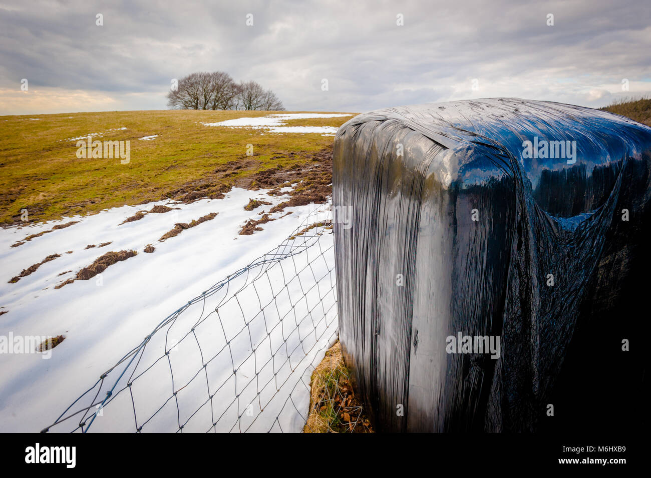 animal-feed-in-winter-south-wales-2018-M