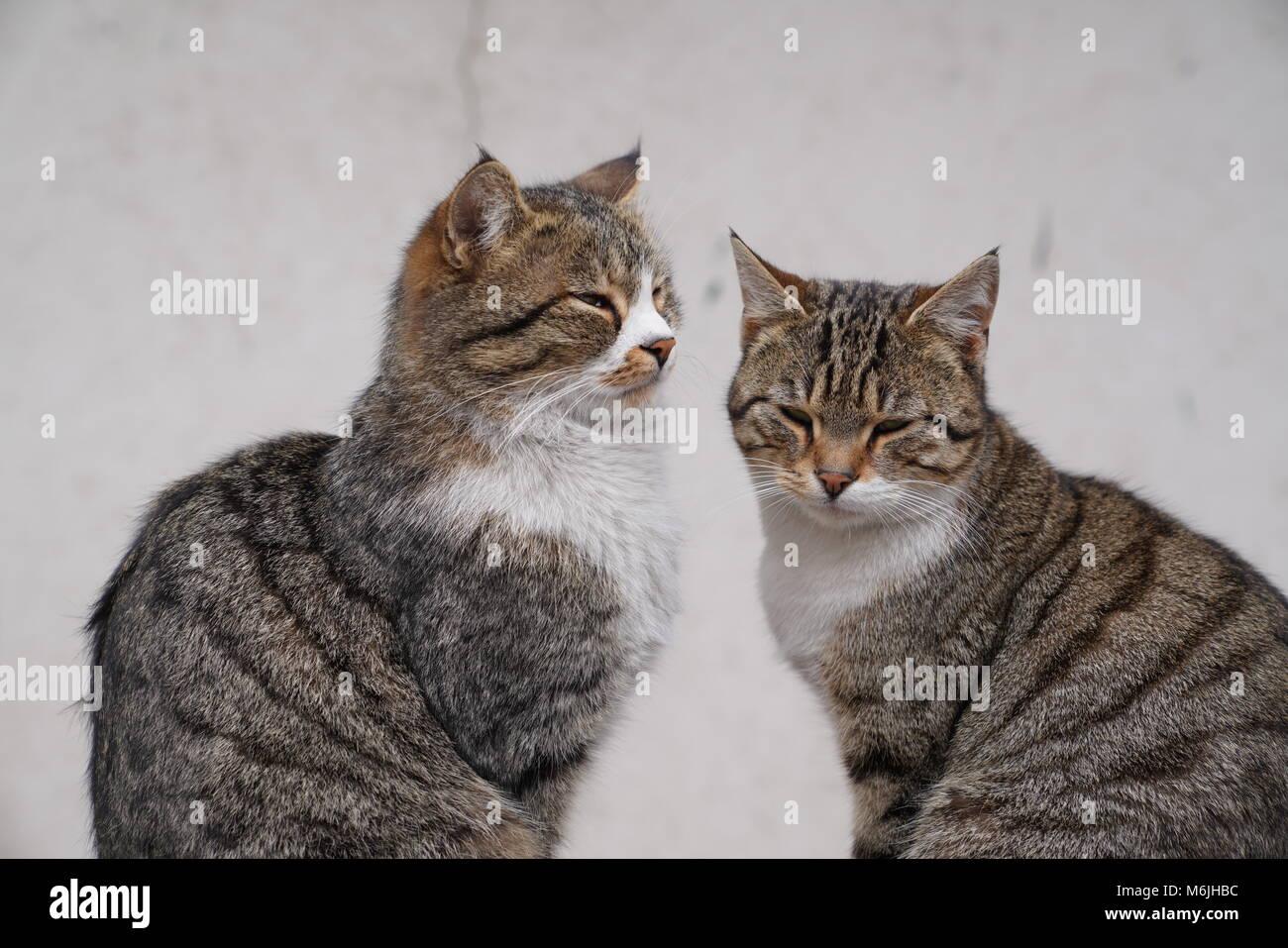 Cats Sherwood Park