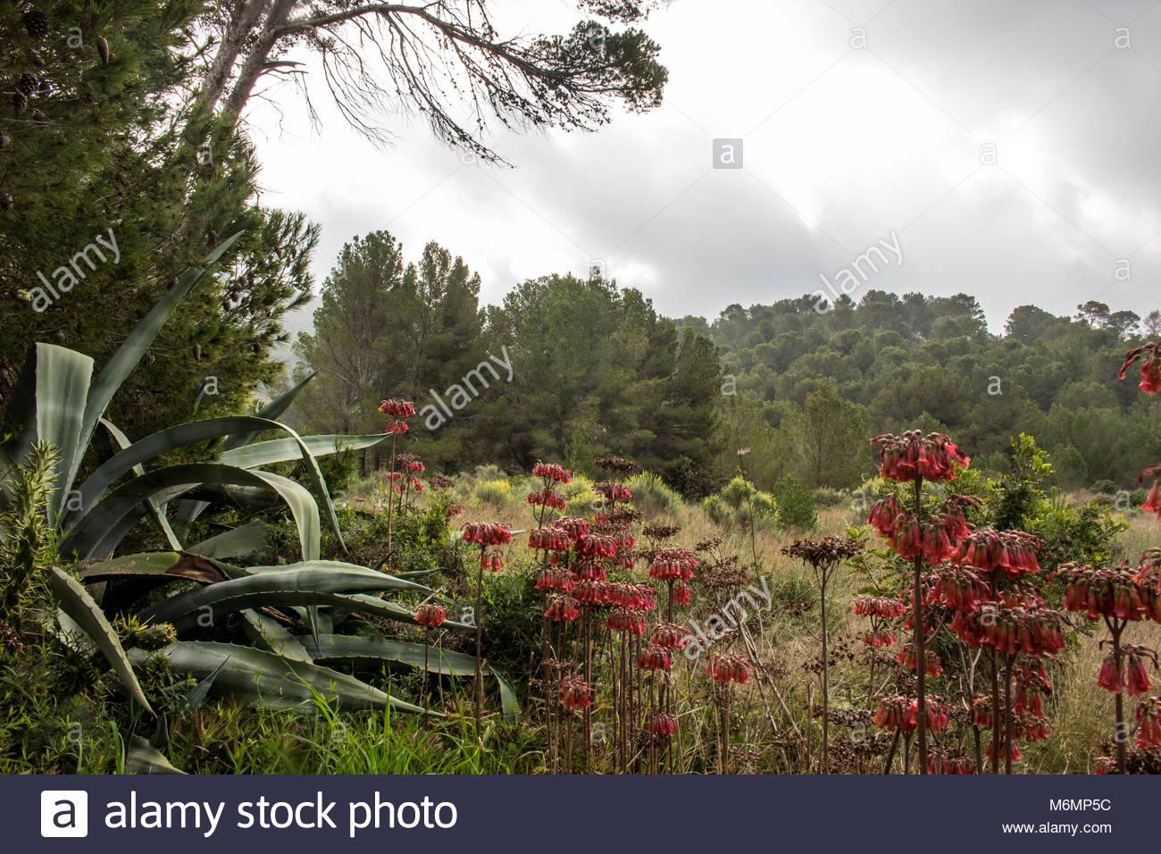 mallorca landscape hiking - Stock Image
