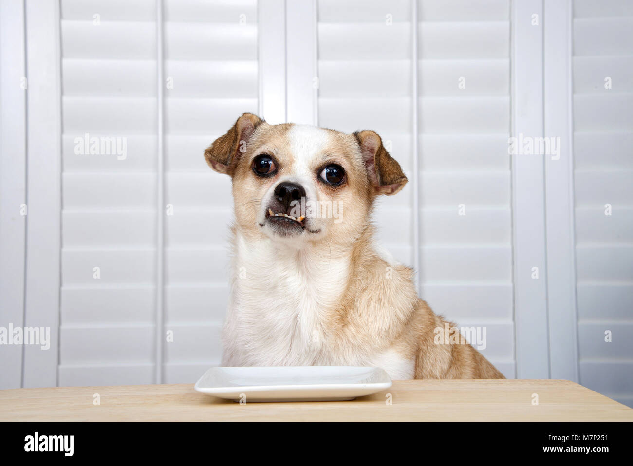 Dog Food For Overweight Senior Dogs