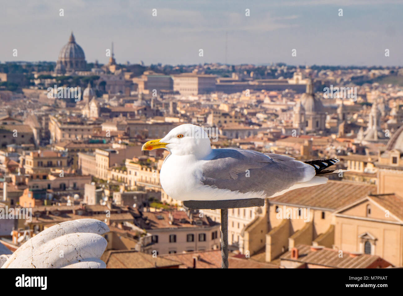 Seagull relaxing on top of Rome skyline - Stock Image