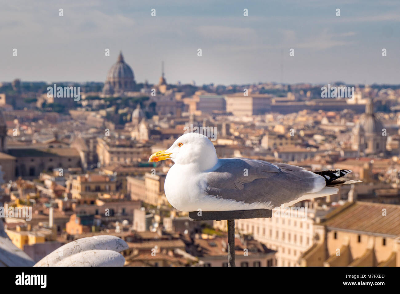 Seagull on top of Rome skyline - Stock Image