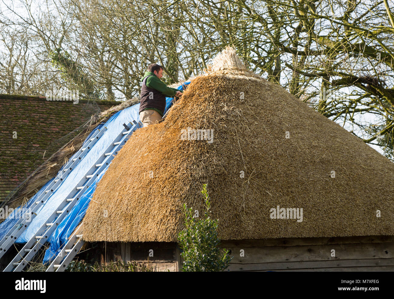 Thatcher working on roof of house, Alton Priors, Wiltshire, England, UK - Stock Image