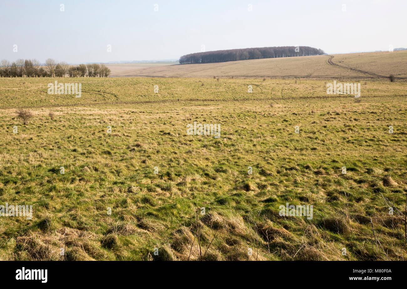 Chalk landscape scenery near Chitterne, Salisbury Plain, Wiltshire, England, UK - Stock Image