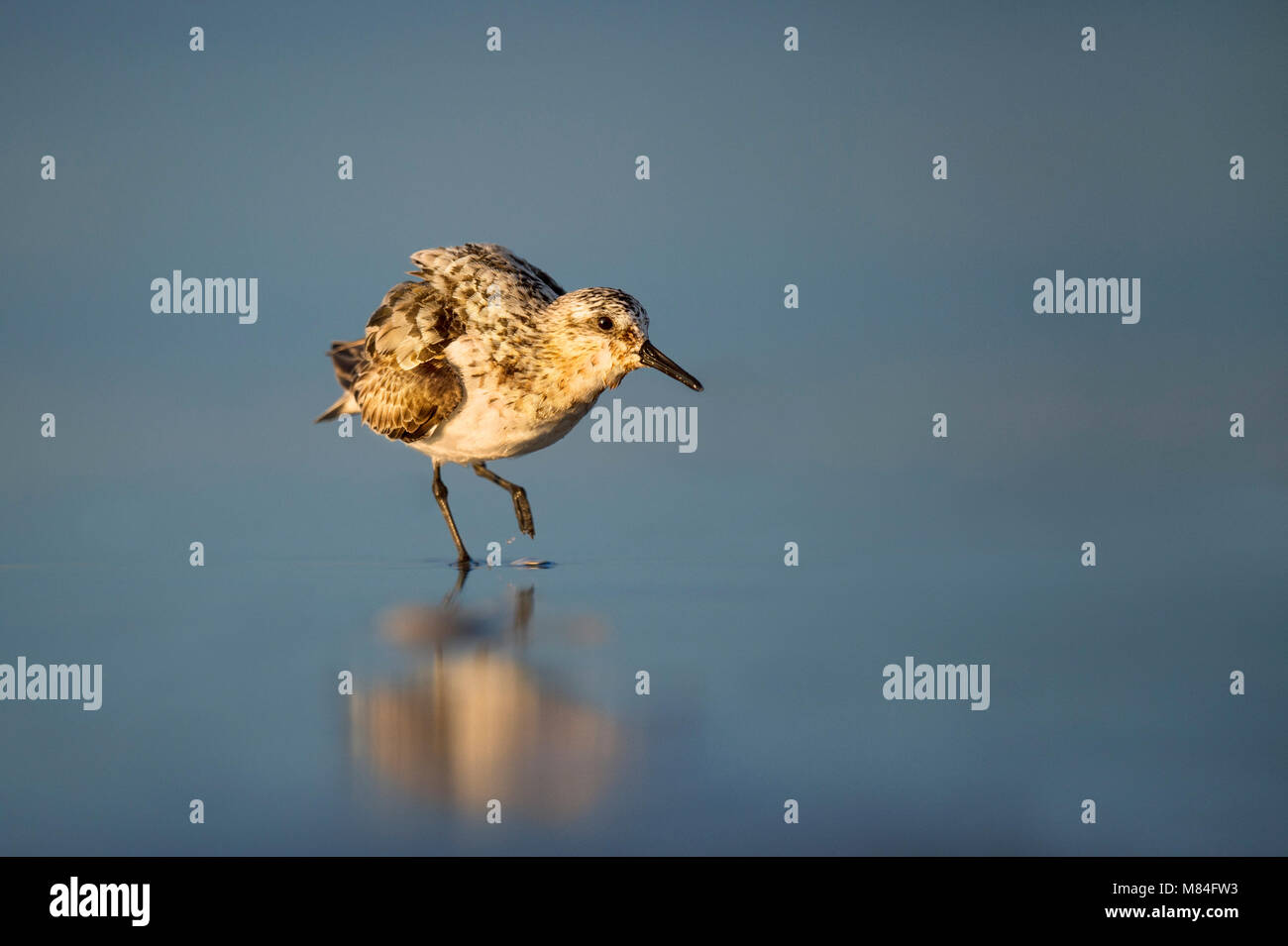Keeping The Water Out Stock Photos Keeping The Water Out Stock Images Alamy