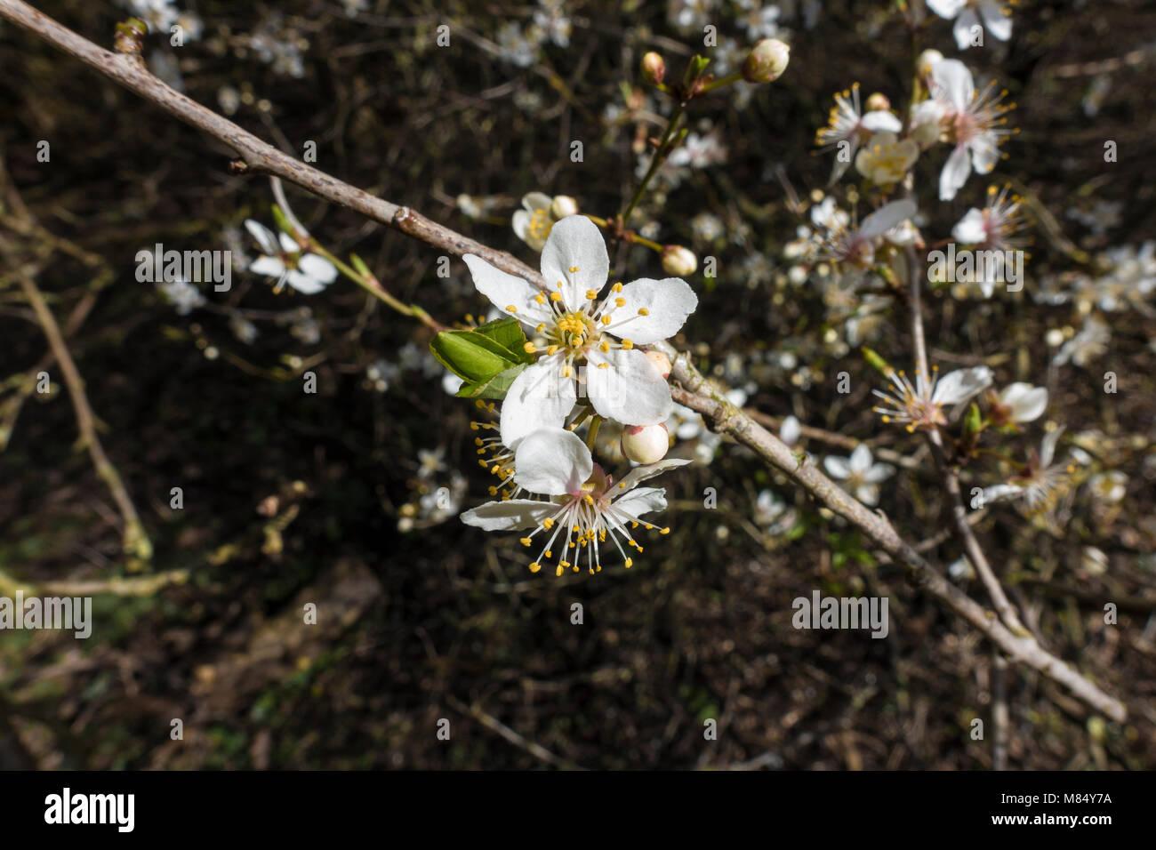 tree-blossom-flower-M84Y7A.jpg