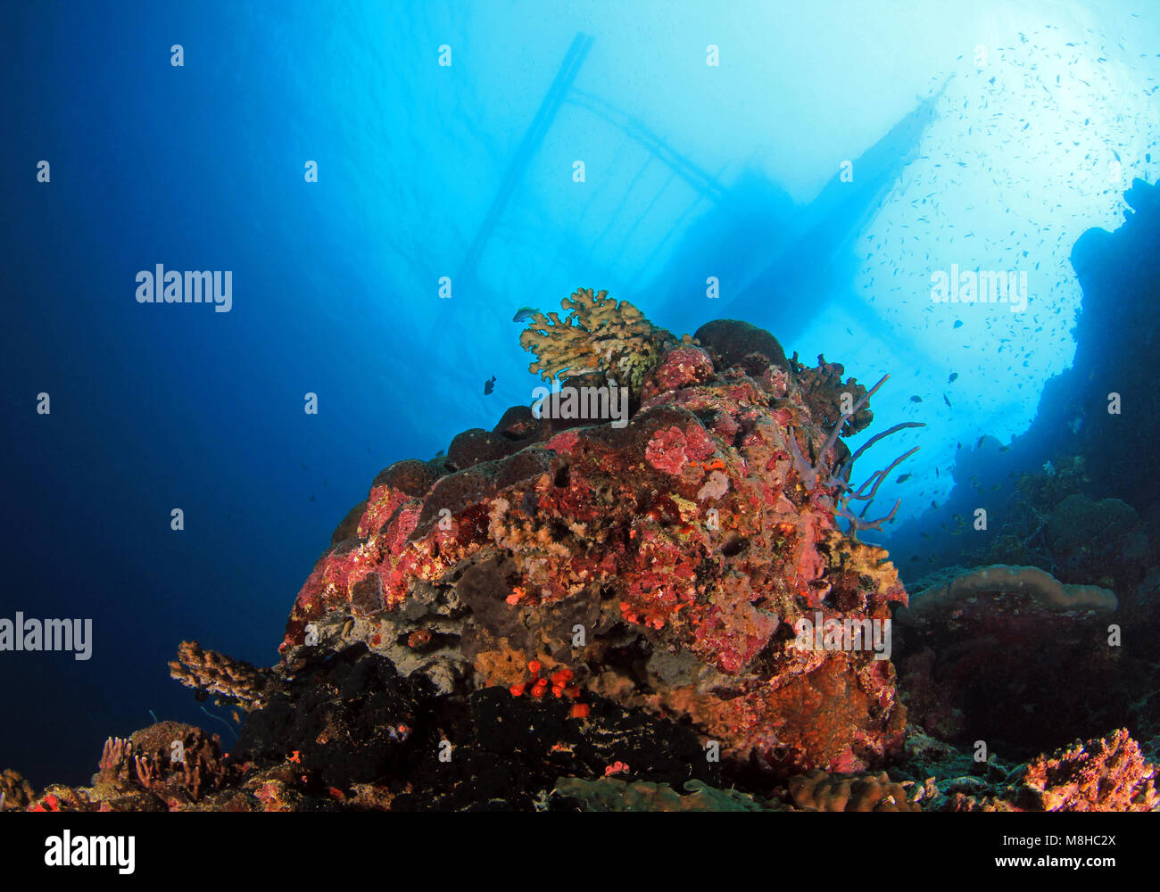 Coral Reef and Bangka Boat from Below. Pescador Island, Moalboal, Philippines - Stock Image