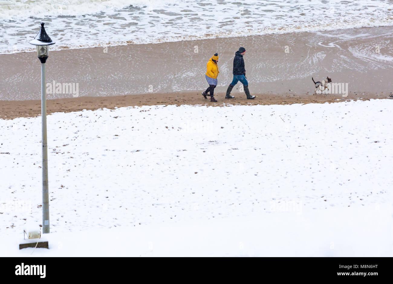 Dog Walking Bournemouth Beach