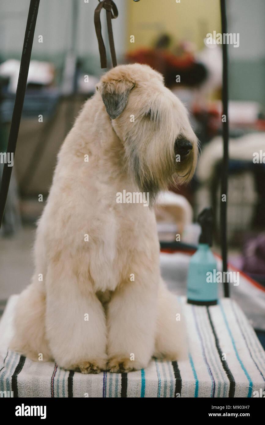 Dog Grooming H Street