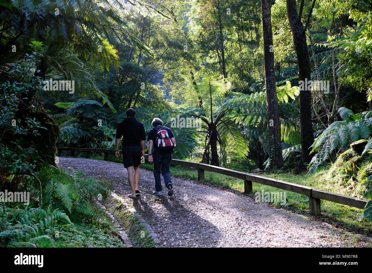 ribeira grande men Two men walking along the forest of caldeira velha,  people enjoy bath in natural thermal pools of caldeira velha near ribeira grande town,.