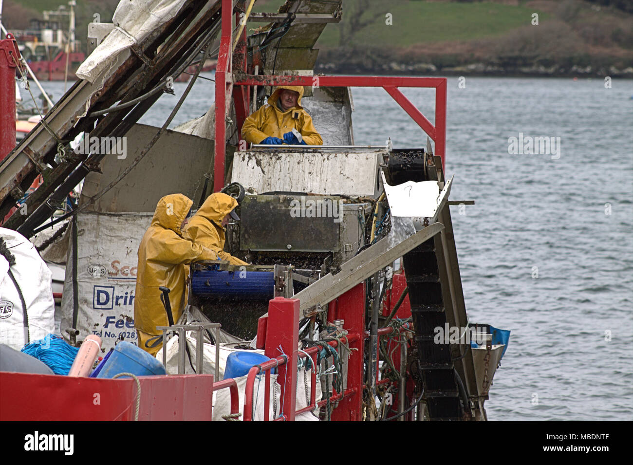 irish-fishermen-on-a-mussel-barge-picking-through-the-haul-of-mussels-later-to-be-graded-and-cleaned-before-being-shipped-to-market-all-over-ireland-MBDNTF.jpg