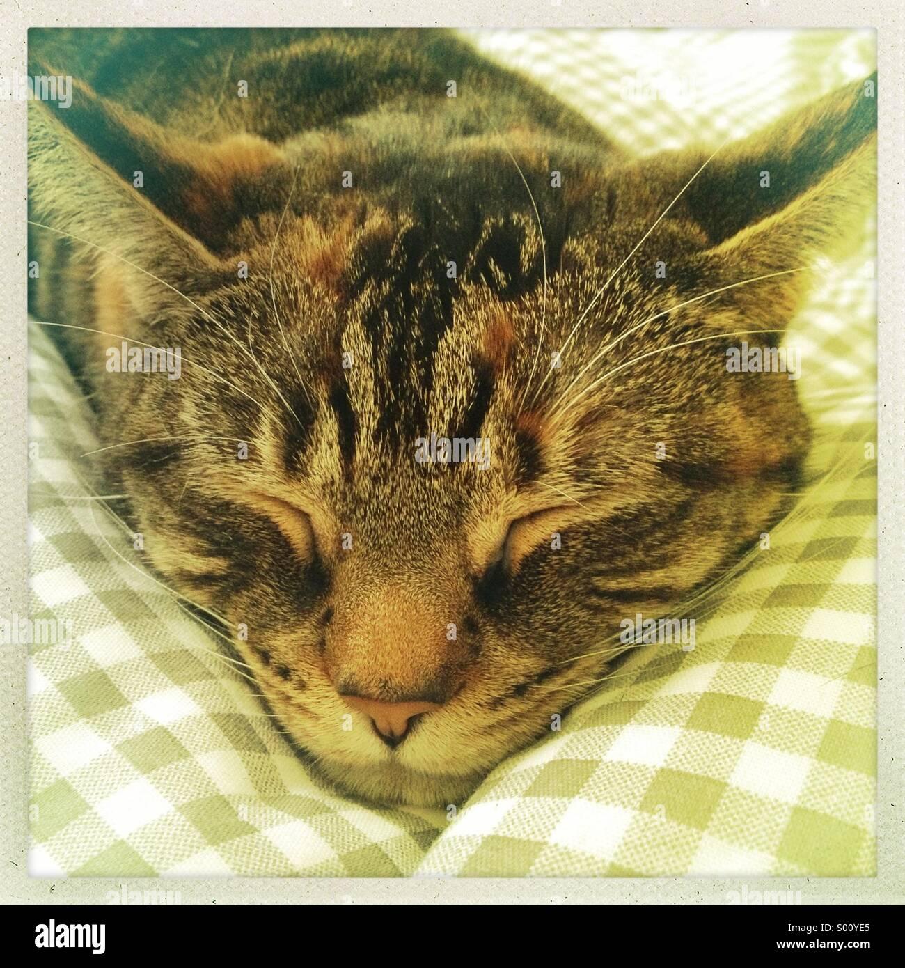 Cat Sleeping On Back On Dashboard