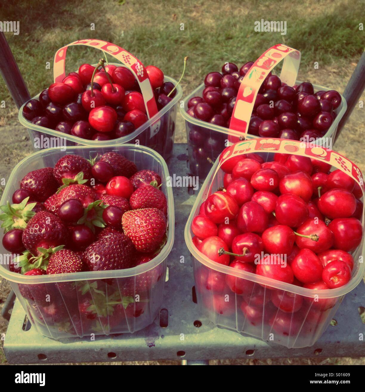 summer-harvest-S01609.jpg