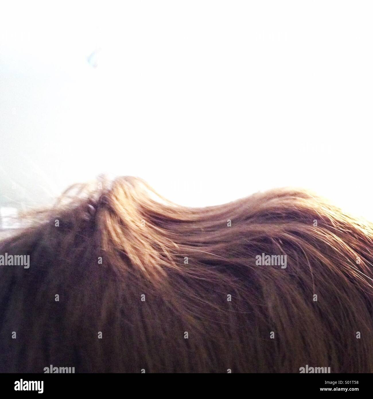 Headphone indent in teenage hair Stock Foto