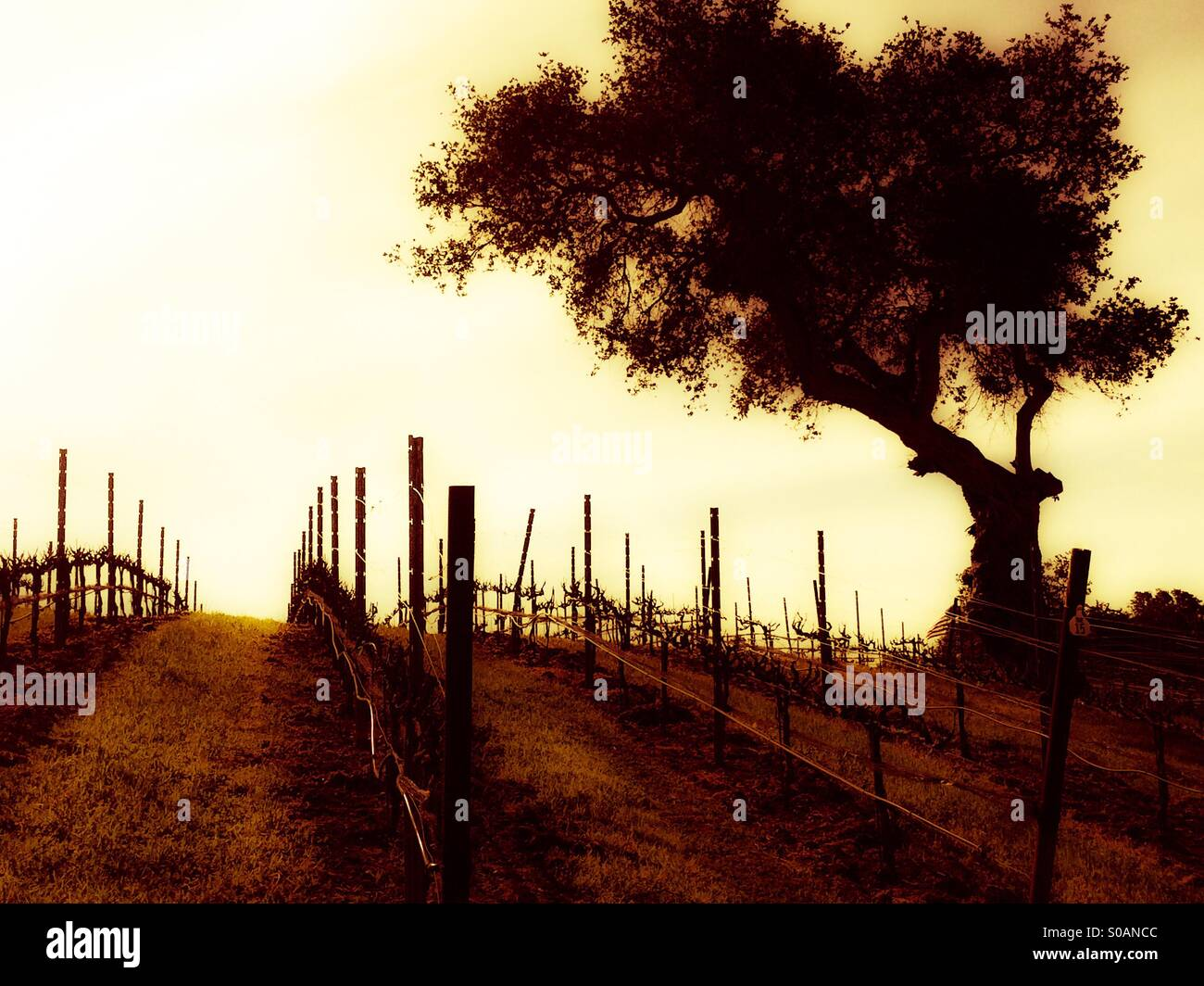 laetitia-vineyard-and-winery-in-arroyo-g