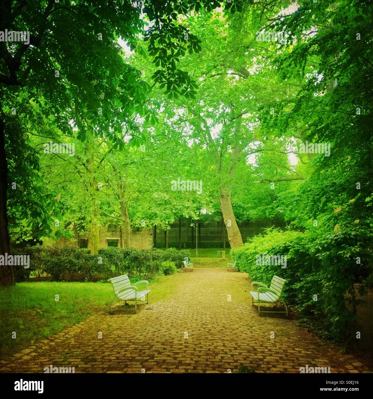 Verdant green Parc de Bercy with stone pavement, benches, trees and fresh Spring foliage in Paris, France. Vintage Stock Photo
