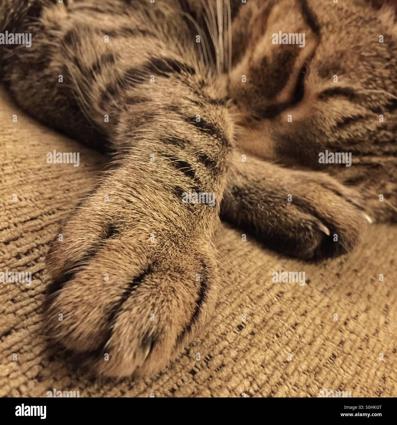 tabby-cat-sleeping-with-paws-outstretche