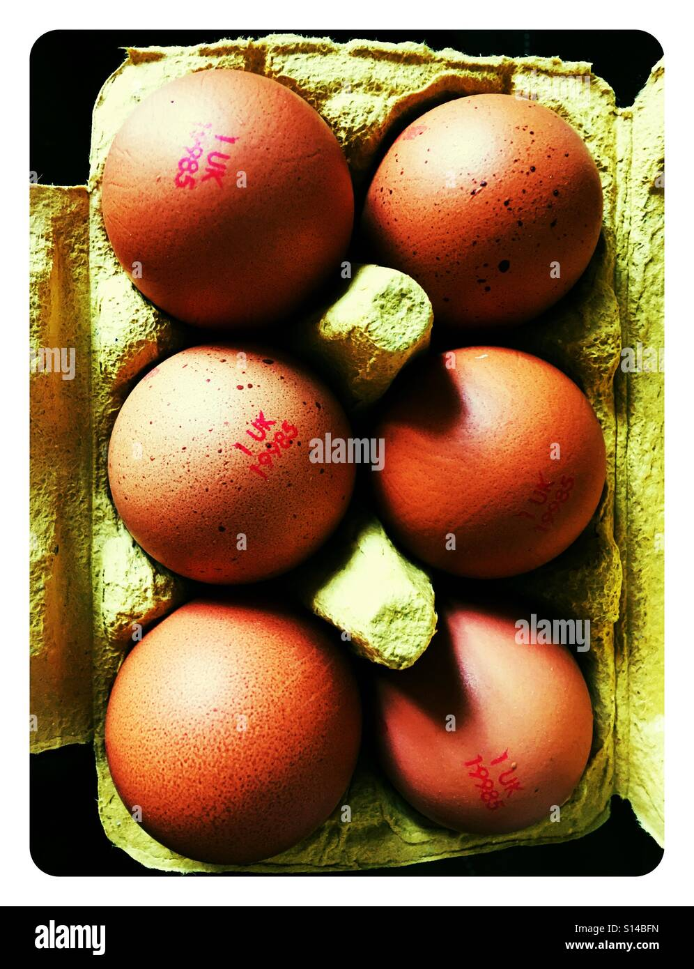6 golden brown eggs displayed in an egg box Stock Photo
