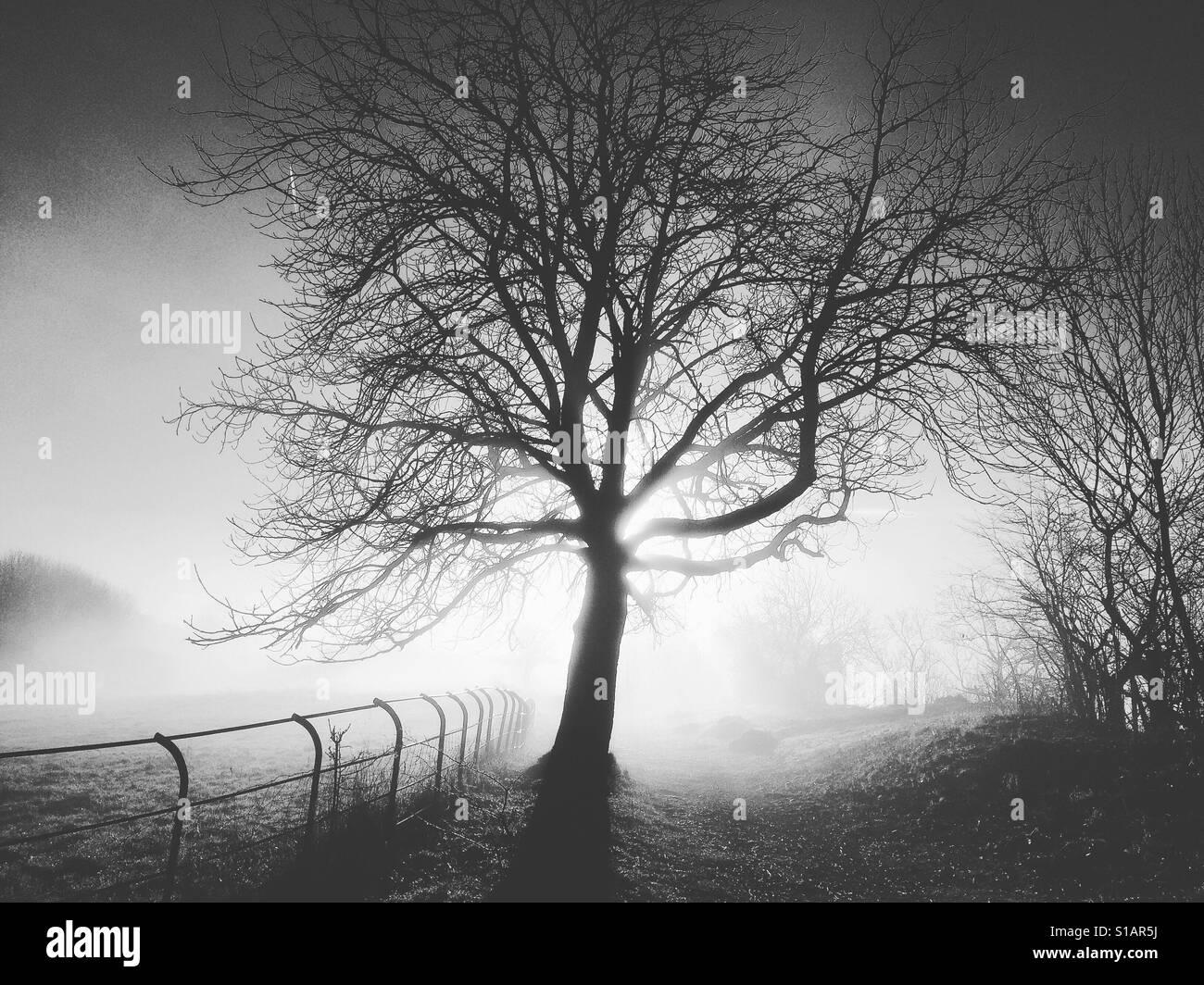 Silhouetted tree in winter Matlock Bath Derbyshire Peak District UK Stock Foto