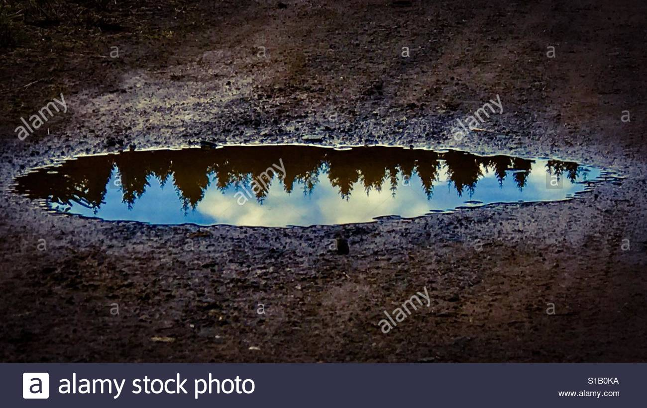 Puddle Stock Foto