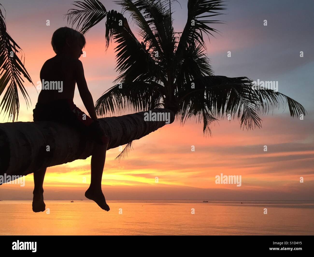 Silhouette of boy sitting on the palm tree with sunset background Stock Foto
