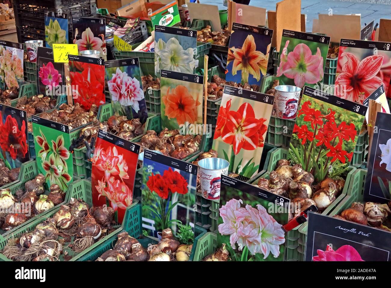 Dieses Stockfoto: Dutch Bulbs zum Verkauf, deutscher Markt, Manchester Weihnachtsmärkte, Albert Square, Manchester, Greater Manchester, England, Großbritannien, M2 5DB - 2ADE47