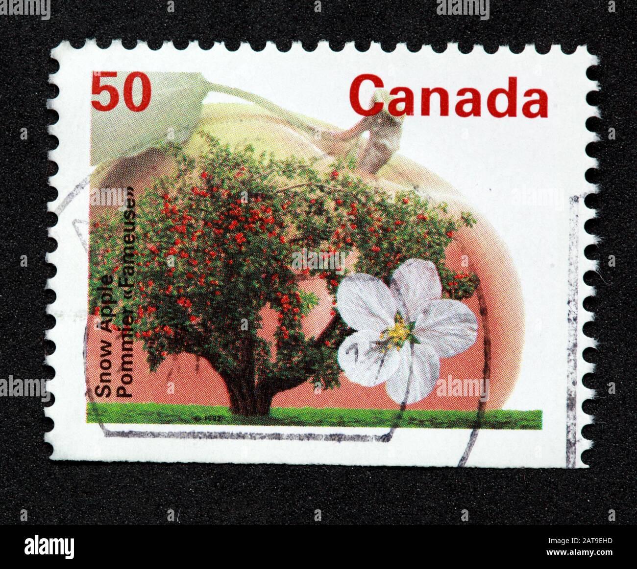 Dieses Stockfoto: Kanadische Briefmarke, Canada Stamp, Canada Post, gebrauchte Briefmarke, Kanada 50c,50cent, Schneeapfel,Blume,Baum - 2AT9EH