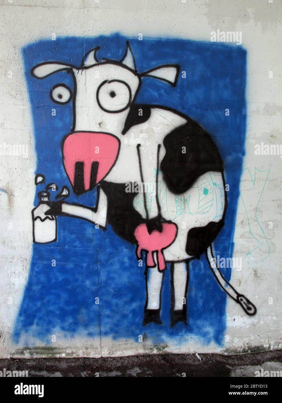 Dieses Stockfoto: Kuh mit Milch und Eutern unter der A50 Straßenbrücke, Massey Brook, Grappenhall, Warrington, Cheshire, England, Großbritannien - 2BTYD1
