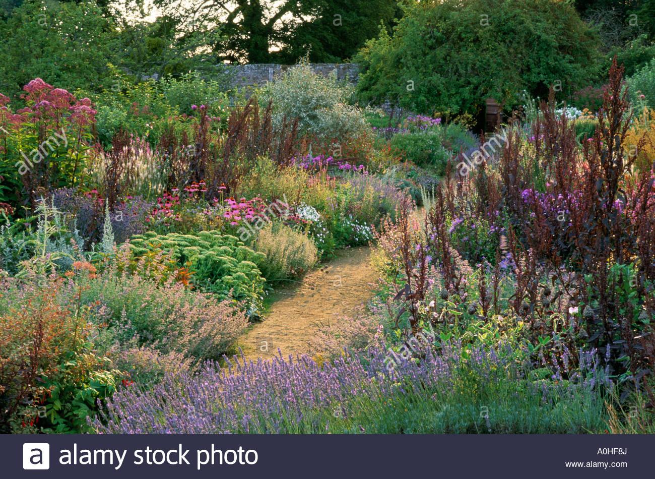 parham sussex staudenrabatten im sommer lavendel echinacea. Black Bedroom Furniture Sets. Home Design Ideas