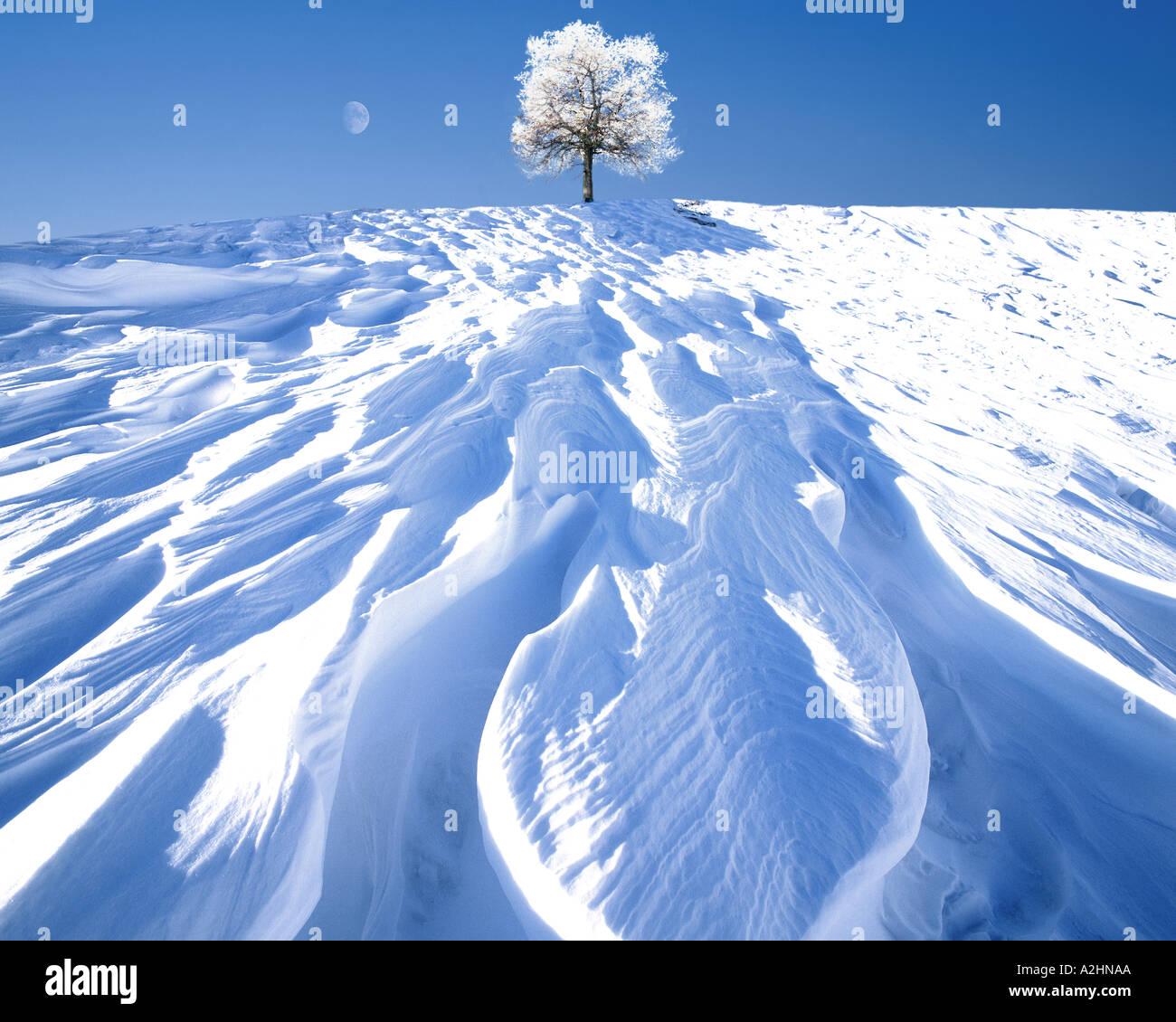 VIER Jahreszeiten: Winter Stockbild