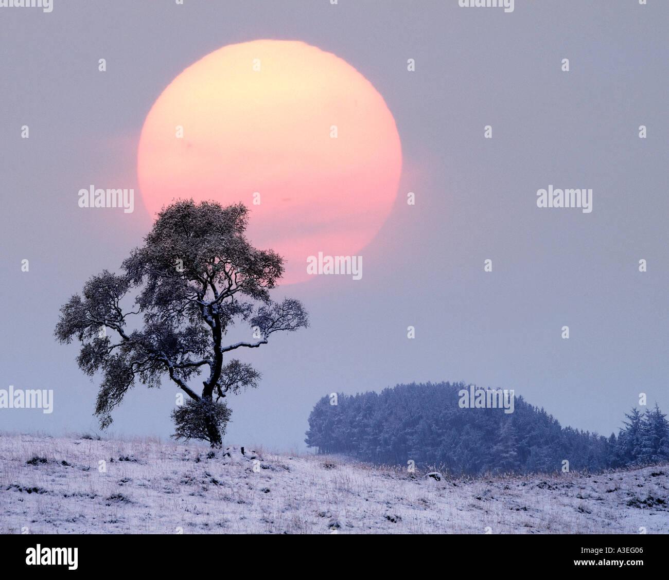 GB - Schottland: Winter in Glen Lochsie Stockbild