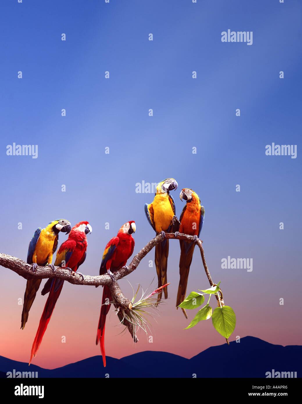 Tierwelt: Papageien sitzen auf einem Ast Stockbild