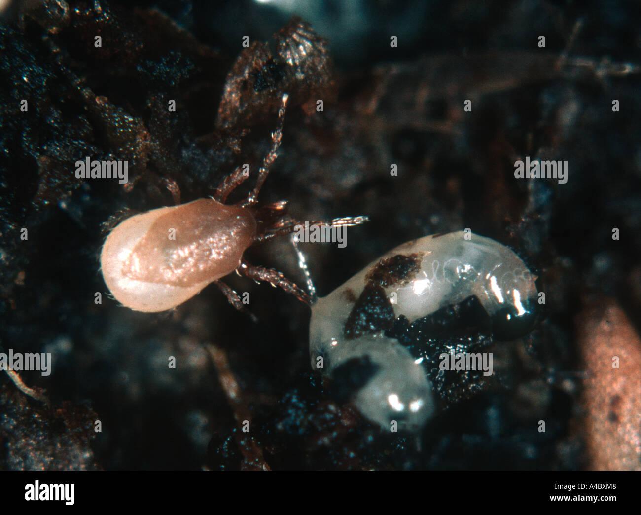 Miles stockfotos miles bilder alamy for Fliegen larve