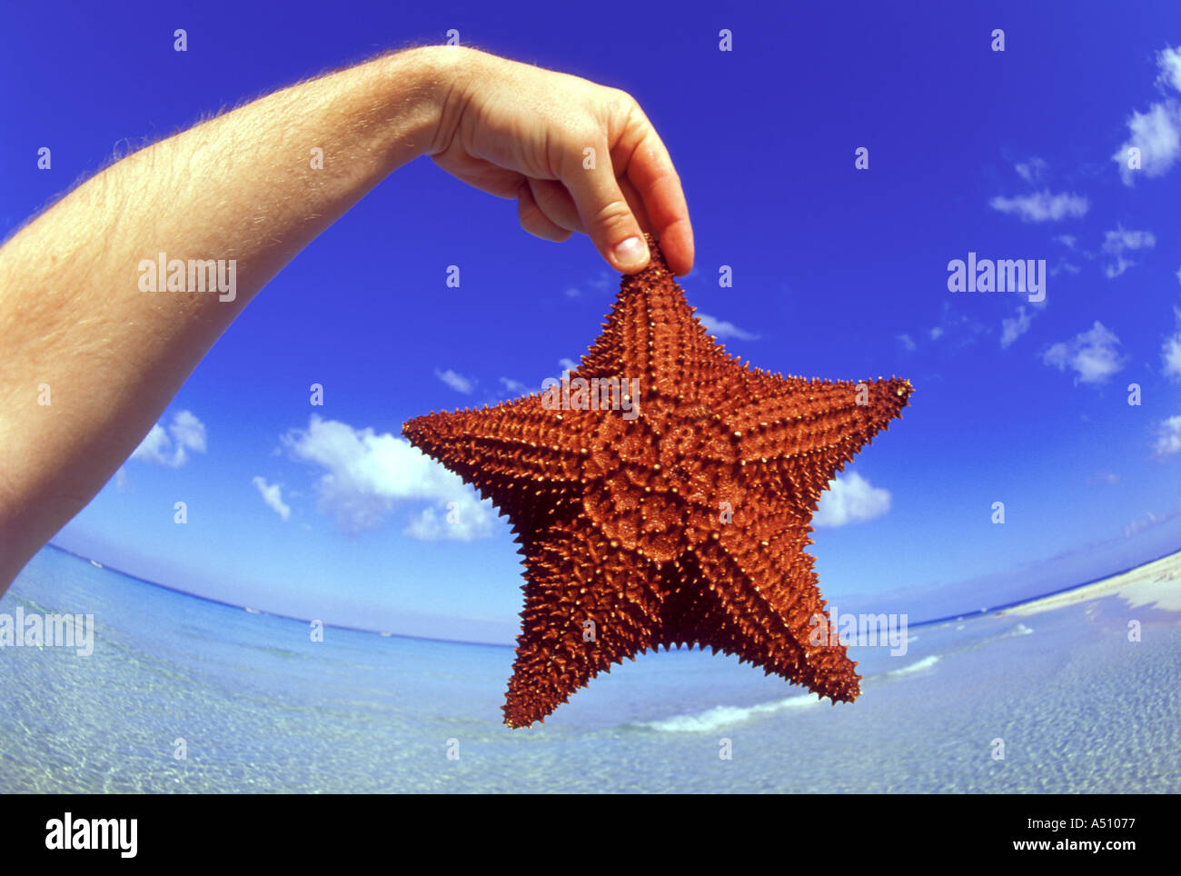 Mans Hand mit roter Seestern mit gebogenen Horizont im Hintergrund Cancun mexikanischen Karibik Stockbild